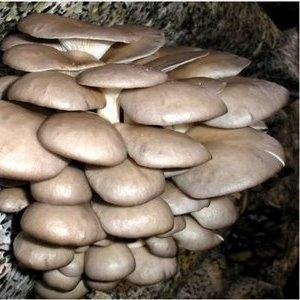 Грибы,  грибные блоки,  мицелий