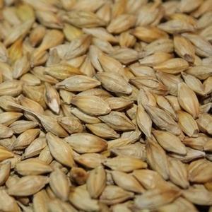 Куплю постоянно пшеницу кукурузу ячмень