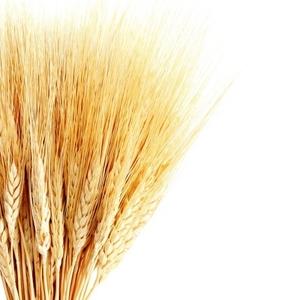 Закупаем зерновые и масличные культуры