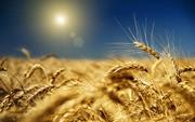 Закупаем Дорого с Самовывозом Зерновые и Бобовые,  Оплата без задержек