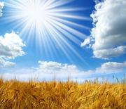 Компания закупает зерновые,  масличные,  бобовые культуры.
